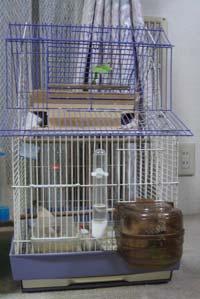 手作りの巣箱