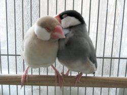 Love_shizugon1_2