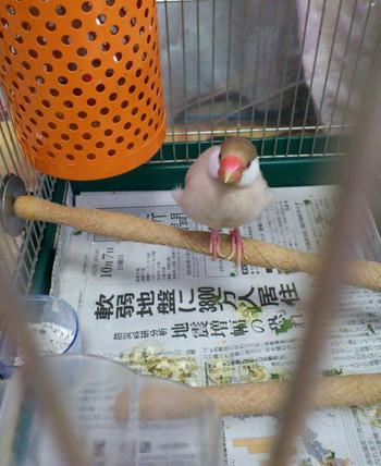 Natsu_11th_birth_05